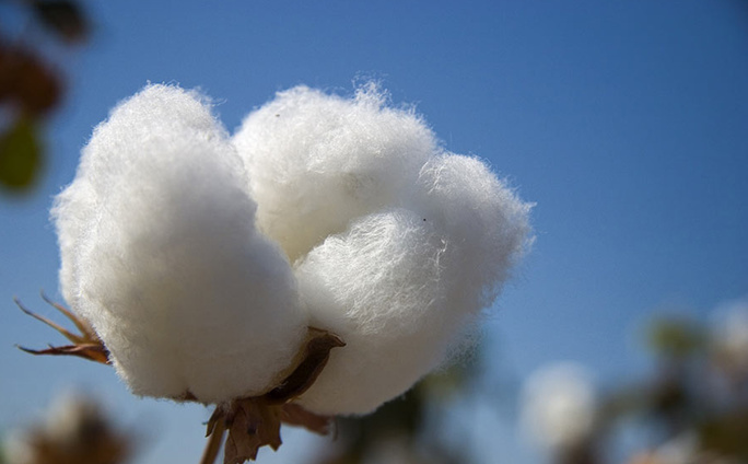 properties of cotton
